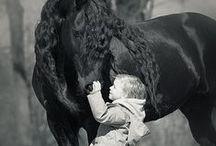 Horses / by Katie Garner