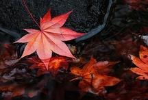 Fall is my season / Tis my season