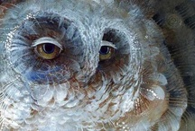Who gives a hoot / Owls, owls, owls-I love owls. They are so soulful