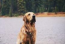 Dogs / Man's best friend.