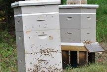 Beekeeping / by Kelli Dover