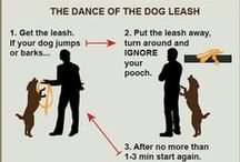 Simple Dog Training / Simple dog training advice from the pro's!
