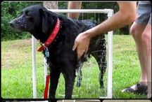 DIY D.O.G. / Pinterest people are the best in DIY and I want to share with you the cool dog stuff others have made