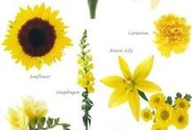 Plants Infographics