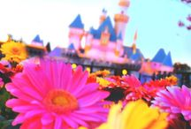 Disney crazy / by Taylor Covington