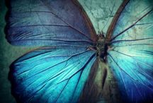 flutter by.