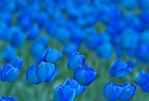 Beautifully Blue / by Phyllis Gillespie