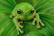 Gorgeous Green / by Phyllis Gillespie