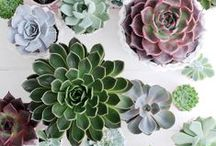 Succulents / by Catherine Campbell