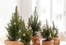 Christmas / by Bridget Alzheimer