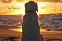 Dogs and my golden sunshine! / by Christine Hamilton