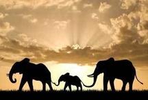 I love elephants / by Ellie Angulo