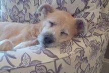 Pets and Pet Beds