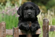 Puppy Love / by Kelly Hurta