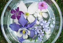 Flower Essences ~ Oils  & Herbs
