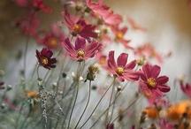 Flowers and Birds / by Kelly Littlefield Boren