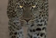 Amazing Animals / by Kelly Littlefield Boren