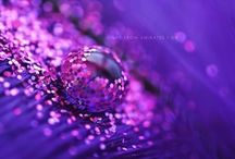 Colour My World | Purple