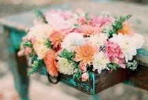 Flowers and Garden / by Sofia Almeida