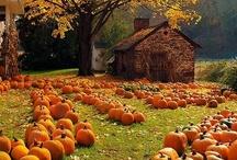 Fall My Favorite Season / by Kelly Littlefield Boren