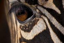 Photography | Wildlife