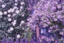 lilac and purple