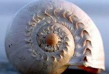 She sells sea shells...