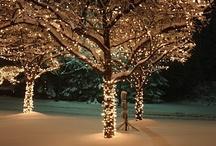 Winter Wonderland / by Melissa Garza