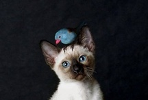 Dr. Doolittle / Kitties, Puppies, Bunnies and more! / by Liz Tailor