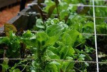 Vegetable Garden / Tips & Tricks for me and Jourdan....