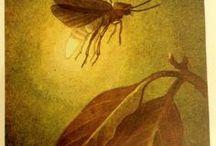 Fireflies/Lightning Bugs