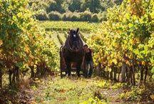 Wine Merchants / #Purveyors of #finewines #worldwide.