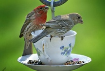 Furry Feathered Friends / Feeders, houses, baths,   for my back yard family / by T. (NAN) MILLER