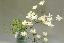 Ikebana & bonsai & ukiyoe