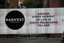 Harvest... the development / by Catherine Serafini
