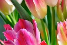 Flowers / by Diana Stephenson