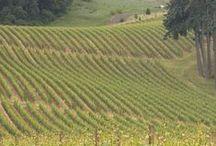 Oregon Wine / #OregonWine + #WillametteValley #Premium #Wine #PinotNoir #PinotGris #PinotBlanc #Sparkling #Chardonnay  #Reisling #HappyPlace