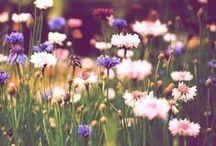 ~#* Flowergasm *#~ / by PHANTOM'S ROSE: the Fantasy Faery WORLD of Coriander Shea