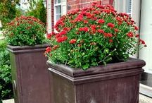 GardenIng W/ Containers, Planters & Pots / Creative ideas for using pots to extend garden into living spaces, design, creating privacy, instructions for making own pots, containers, etc. / by Barbara Peers Robeson