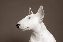 Animal Companions / by Valya