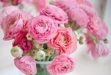 Flora / Pretty flowers. / by Cassie Guerrera