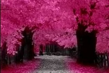 Pink trees / I love them :) / by Rosa Valls