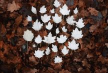 Flora flourish / by Laurel Hoffman