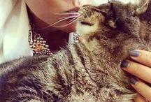 Kitties / All cute, adorable, sassy kitties