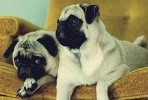 Pugs / I have such a love for pugs and their silly squishy faces.