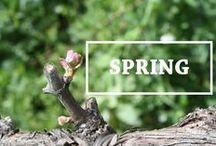 Spring / The Vineyards in Spring.