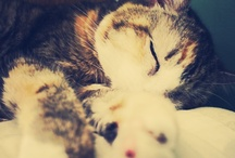 Lovely Flurry Things / I love cats.... You really can't tell? / by Ashley ♥ Breen