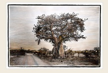 Trees Series / Beautiful African Landscapes - Trees are truly symbolic. Marlene Neumann - Fine Art Photography