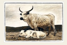 Nguni Series / Sacred 7 Nguni Series. Nguni cattle from South Africa, majestic and unique.