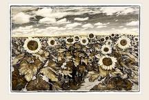 Sunflower Range / Sunflowers - hope, light, energy, enthusiasm. Beautiful African landscapes.  Marlene Neumann - Fine Art Photography